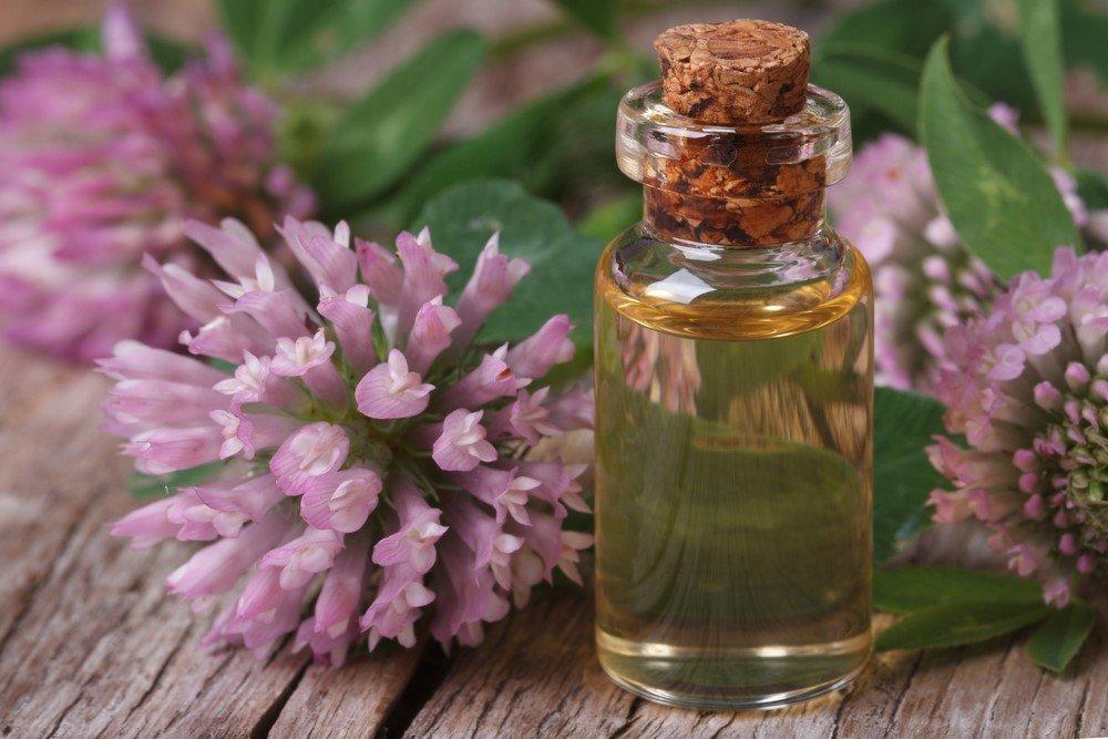 Клевер луговой – эффективное средство от холестерина