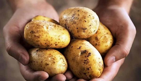 Можно ли есть картофель при высоком холестерине