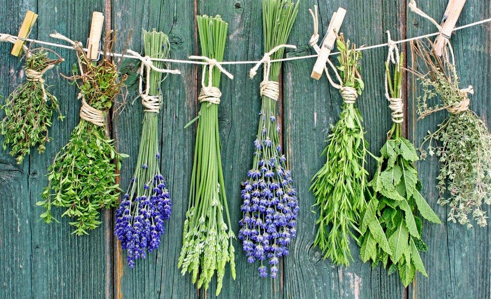 Какие травы снижают холестерин в крови