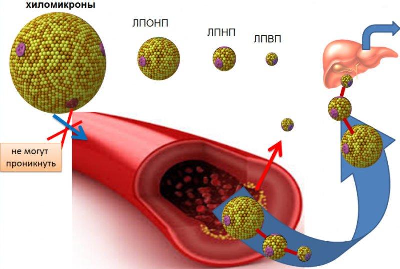 Как бороться с холестерином ЛПНП